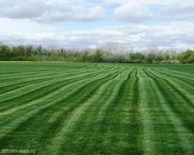 Рулонный газон «Универсальный», м2