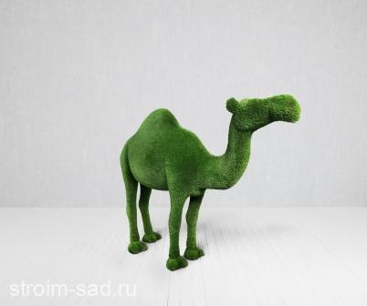 Топиари Верблюд одногорбый