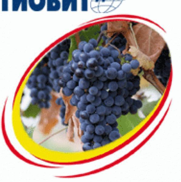 Тиовит Джет — фунгицид для защиты винограда/плодовых/овощных культур от настоящей мучнистой росы, 20 кг, Syngenta