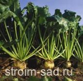 Топсин -М, СП — универсальный защитник зерновых культур и сахарной свеклы, 0,5 кг, Sumitomo (Сумитомо) Япония