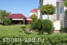 Топиари Слон