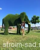 Топиари Слон большой