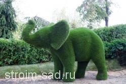 Топиари Слон малый