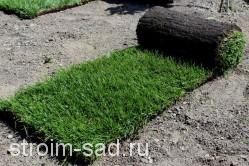Рулонный газон «Стандарт», м2