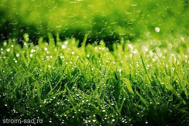 Посевной газон: посев, уход