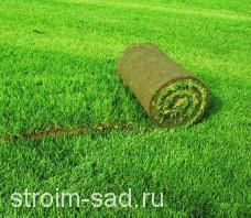Рулонный газон «Теневыносливый» , м2