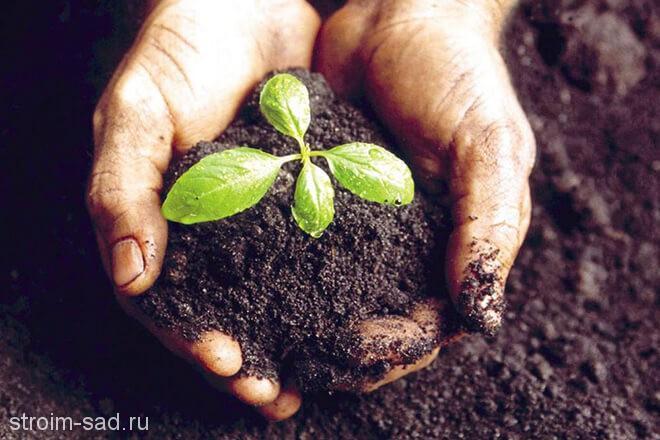 Грунты и субстраты для растений: основные виды
