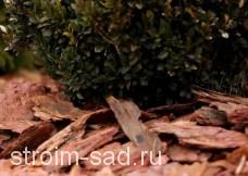 Кора сосны и лиственницы