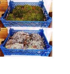 Декоративный мох в лотках (консерв.)