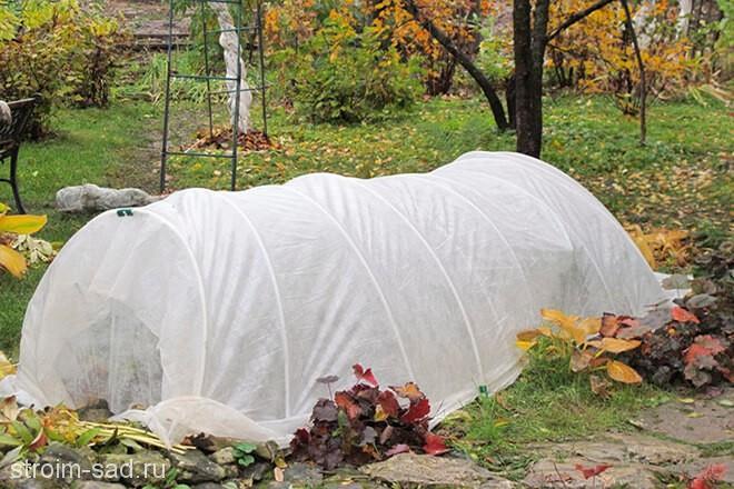 Зимние укрытия для хвойных растений